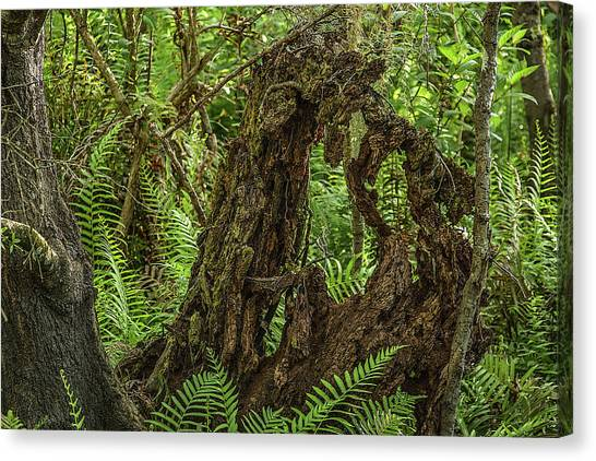 Nature's Sculpture Canvas Print