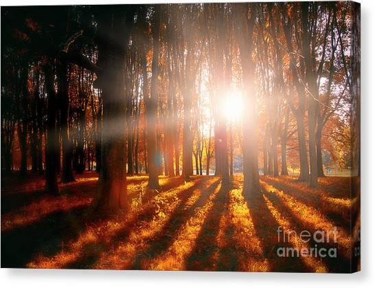 Nature's Shadows Canvas Print by Alessandro Giorgi Art Photography