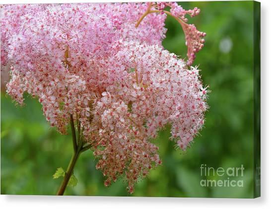 Natures Untouched Beauty Canvas Print