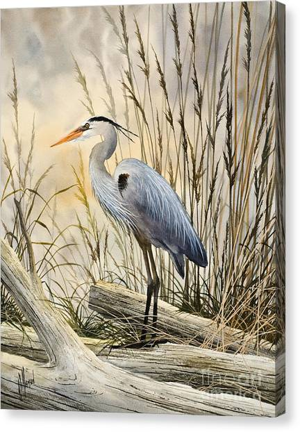 Heron Canvas Print - Nature's Wonder by James Williamson