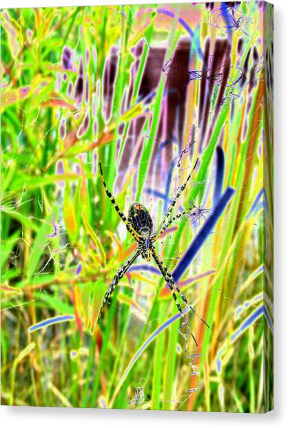 Nature's X Canvas Print by Peter  McIntosh