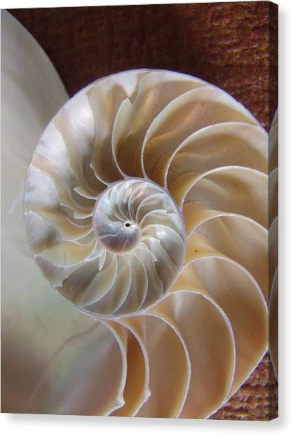 Nautilus Shell Canvas Print