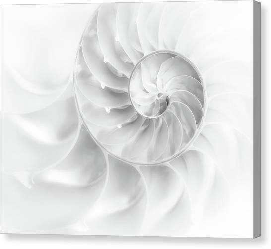 Spiral Canvas Print - Nautilus Shell In High Key by Tom Mc Nemar