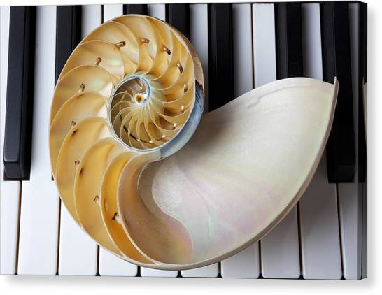 Compose Canvas Print - Nautilus Shell On Piano Keys by Garry Gay
