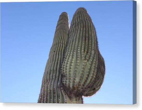 Wickenburg Saguaro  Canvas Print