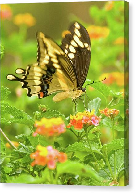 Nectar Collection Canvas Print