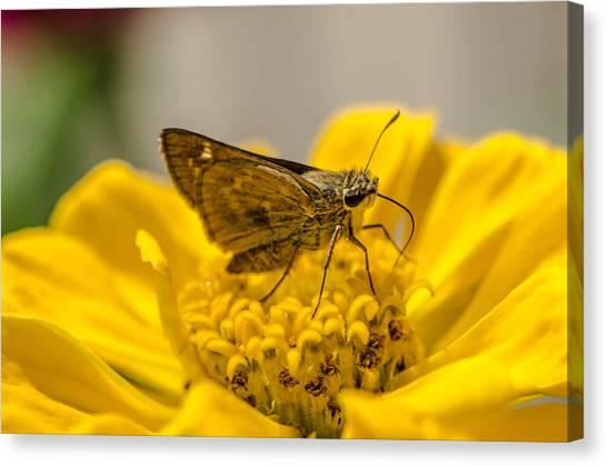 Nectar Delight Canvas Print