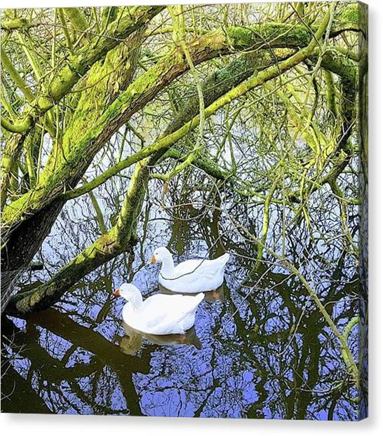 Foul Canvas Print - Grace And Flow by Rowena Tutty