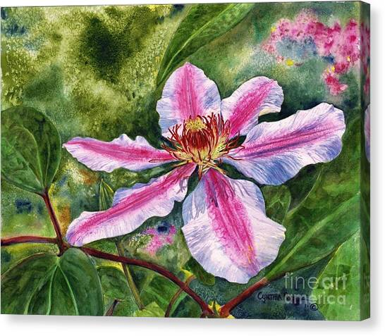 Nelly Moser Clematis Canvas Print