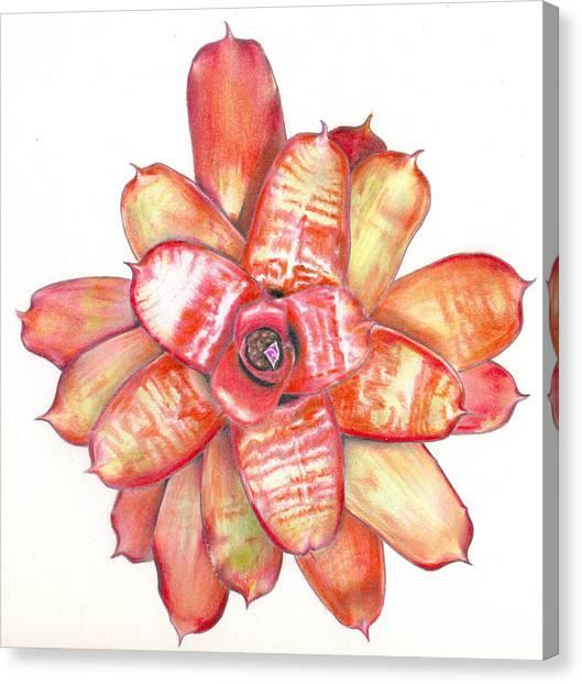 Neoregelia Small Wonder Canvas Print