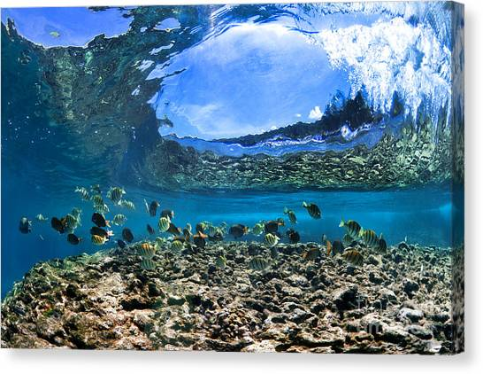 Neptunes Eye Canvas Print
