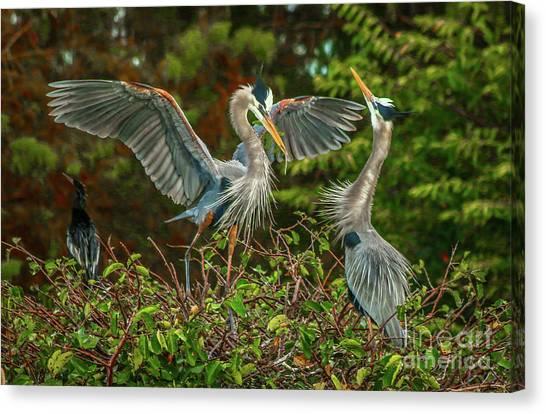 Nest Landing Canvas Print