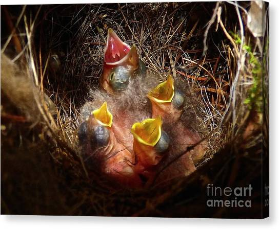 Nest With Brood Parasite Canvas Print
