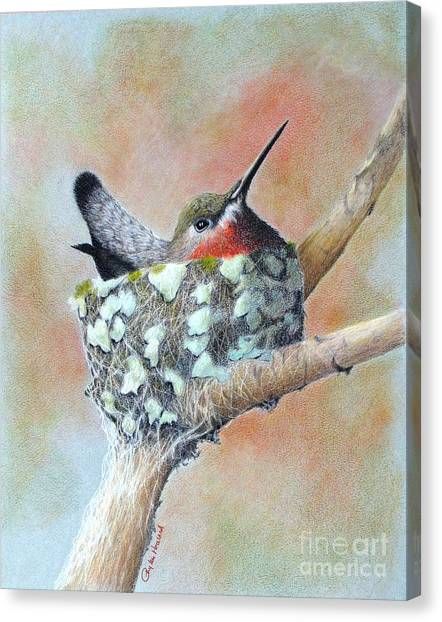 Canvas Print featuring the drawing Nesting Anna by Phyllis Howard