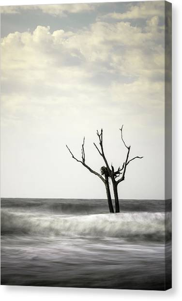 Osprey Canvas Print - Nesting by Ivo Kerssemakers