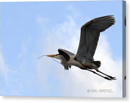 Canvas Print - Nesting Material by Don Durfee