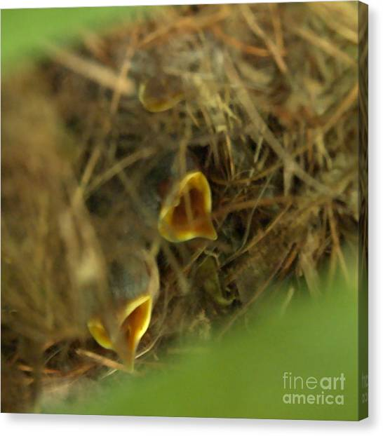 Nestlings Canvas Print