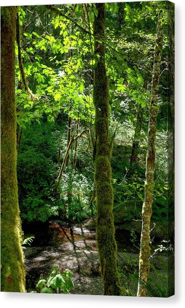 Nestucca River 3039 12x18 Canvas Print
