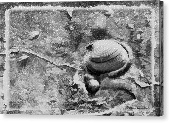 Clams Canvas Print - Never Clam Up Bw by Marvin Spates