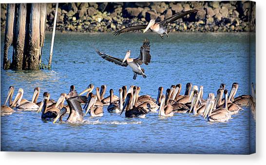 Canvas Print featuring the photograph New Arrivals by AJ Schibig