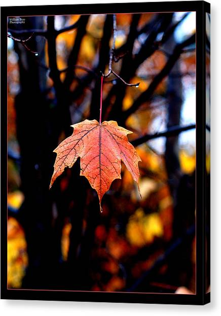 New England Fall - Lone Canvas Print by William Bray