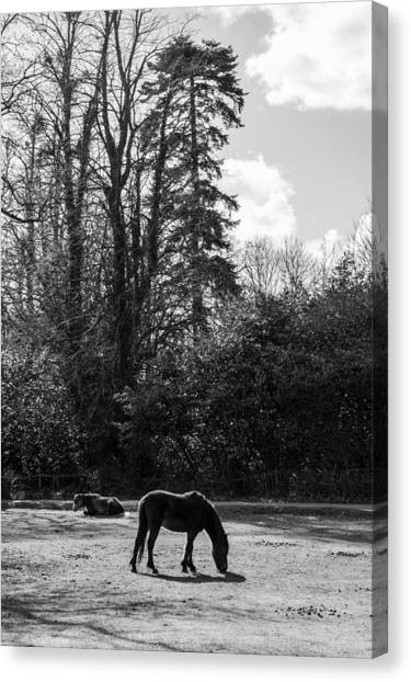 New Forest Silhouette Canvas Print