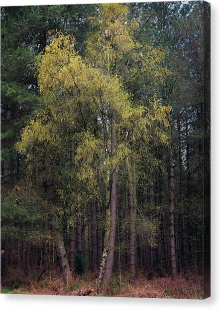 Nottinghamshire Canvas Print - New Growth by Chris Dale