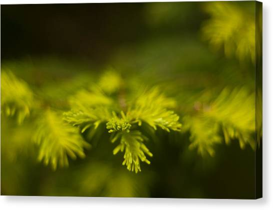 New Growth Canvas Print by R J Ruppenthal