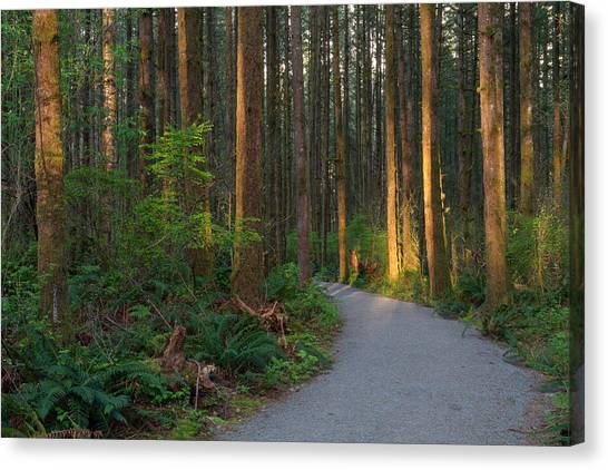 New Hiking Trail Canvas Print by Michael Russell
