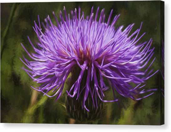 New Mexican Thistle Canvas Print