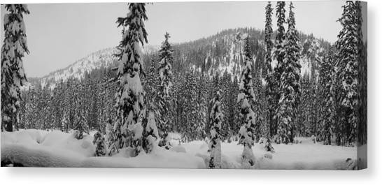 New Snow Canvas Print by Mark Camp