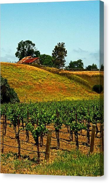New Vineyard Canvas Print