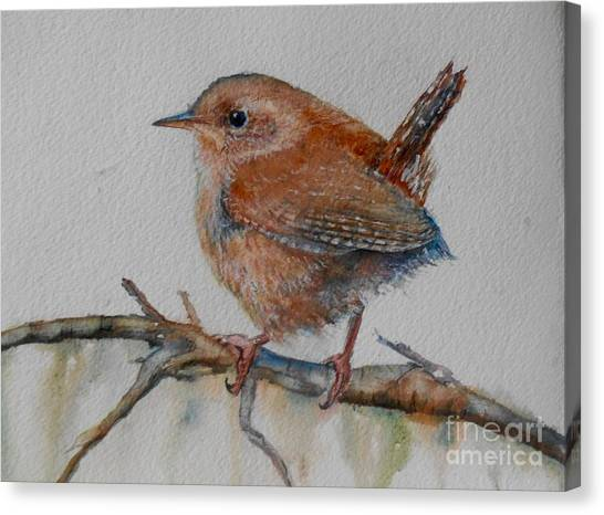 Wrens Canvas Print - New Year Wren by Patricia Pushaw