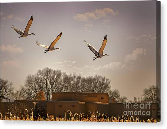 Flight Of The Cranes Canvas Print