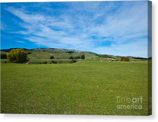 New Zealand Green Rolling Hills Canvas Print by John Buxton