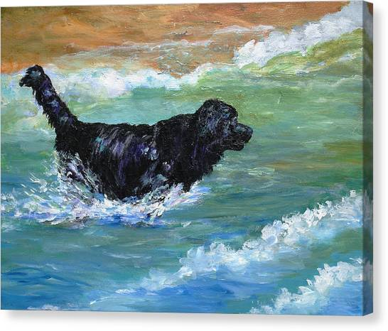 Newfoundland Water Trials Canvas Print
