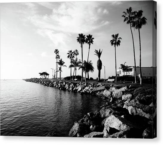 Orange Tree Canvas Print - Newport Beach Jetty by Paul Velgos