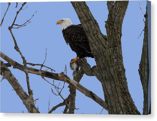 Nice Catch Canvas Print by Dave Clark
