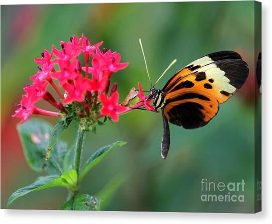 Etherial Canvas Print - Nice Numata Butterfly by Sabrina L Ryan