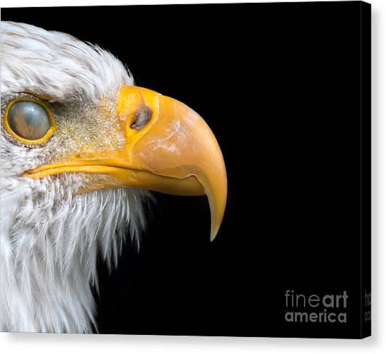 Nictitating Membrane Canvas Print