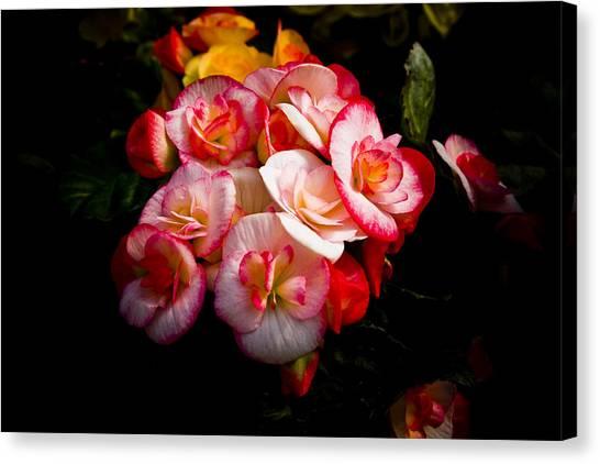 Night Begonias Three Canvas Print by John Ater