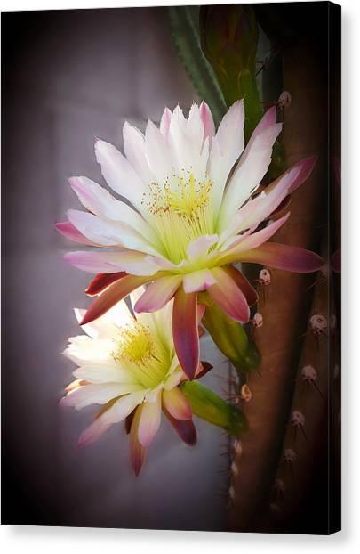 Night Blooming Cereus Canvas Print