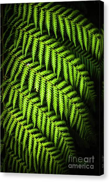 Rain Forest Canvas Print - Night Forest Frond by Jorgo Photography - Wall Art Gallery