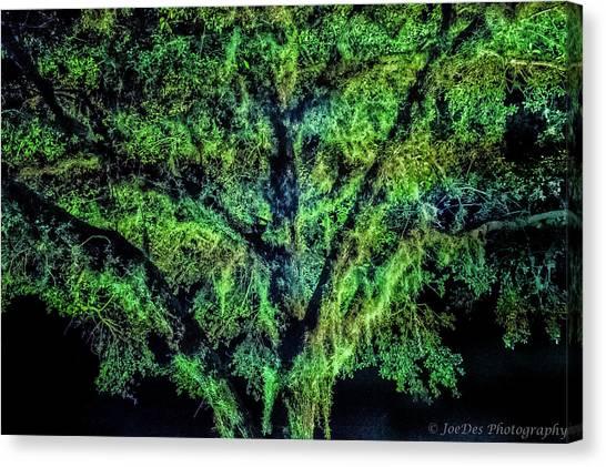 Night Moss Canvas Print