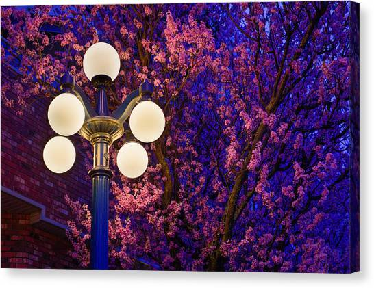 Night Of The Cherry Blossoms Canvas Print