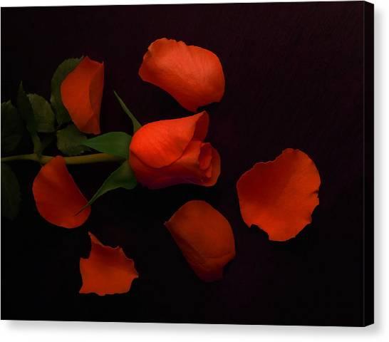 Night Rose 2 Canvas Print