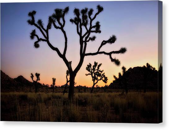 Mojave Desert Canvas Print - Night Silhouette  by Nicki Frates