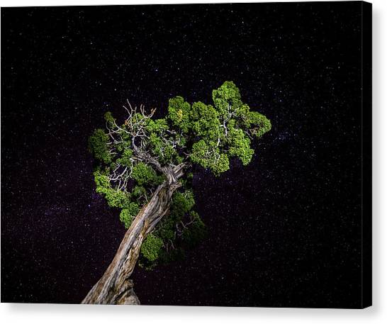 Canvas Print featuring the photograph Night Tree by T Brian Jones