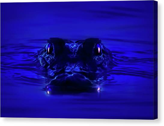 University Of Florida Canvas Print - Night Watcher by Mark Andrew Thomas