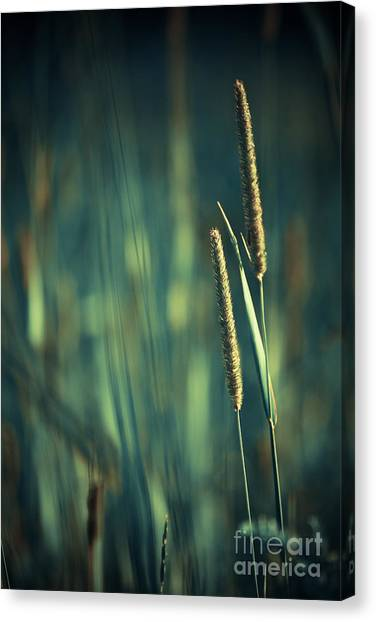 Night Whispers Canvas Print